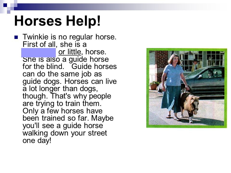Horses Help! Twinkie is no regular horse. First of all, she is a miniature, or little, horse. She is also a guide horse for the blind. Guide horses ca