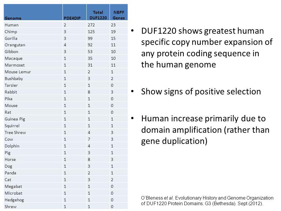 Intra-primate comparison mean:0.91 Rodent-primate comparison mean: 0.61 Number of genes per bin Ka/Ks Distribution Ka/Ks Value