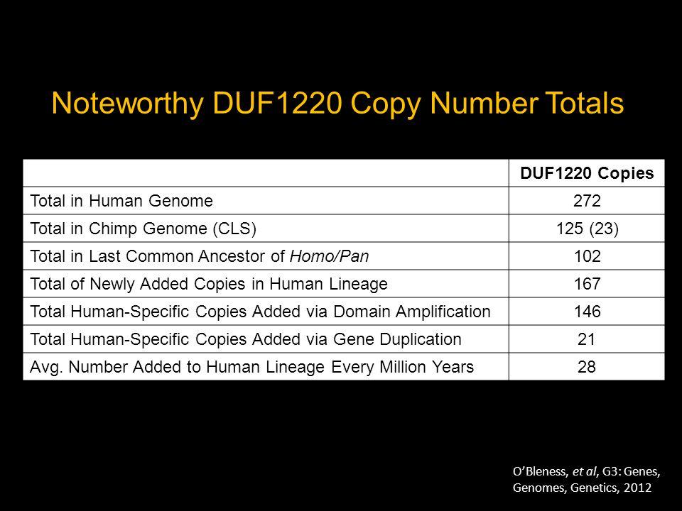 (30yr old female) Cortical regions- Hippocampus- DUF1220 Affinity purified + GFAP + DAPI GFAP DUF1220 Affinity Purified Antibody DAPI