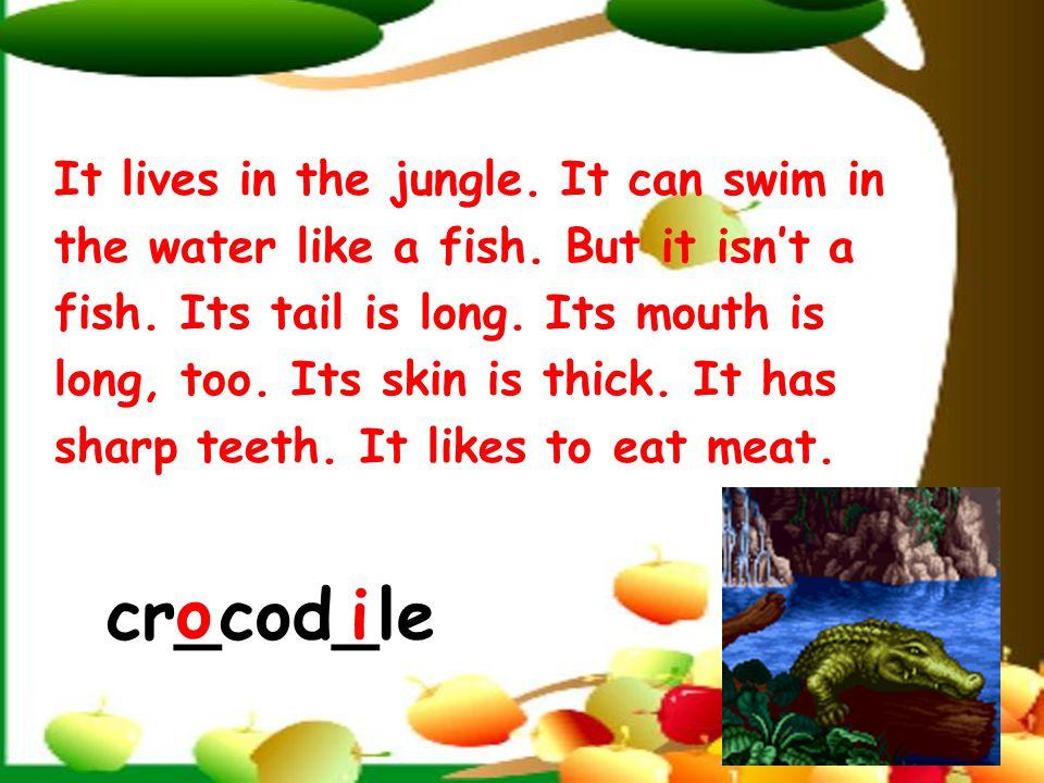______ live in the jungle. jungle