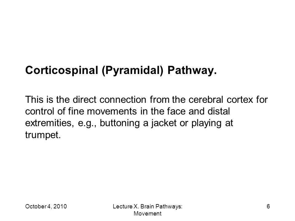 Corticospinal (Pyramidal) Pathway.