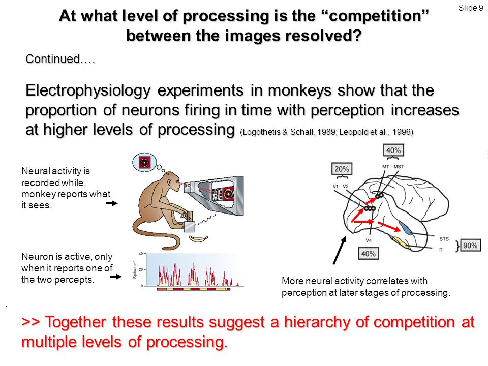 ` Continued…. Electrophysiology experiments in monkeys show that the proportion of neurons firing in time with perception increases at higher levels o