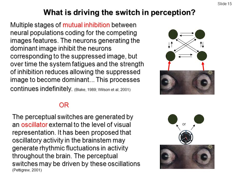Multiple stages of mutual inhibition between neural populations coding for the competing images features.