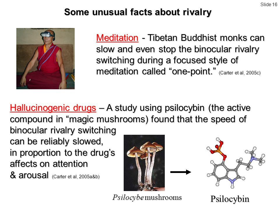 Some unusual facts about rivalry Meditation - Tibetan Buddhist monks can slow and even stop the binocular rivalry switching during a focused style of meditation called one-point. (Carter et al, 2005c) Psilocybe mushrooms Psilocybin Hallucinogenic drugs – A study using psilocybin (the active compound in magic mushrooms) found that the speed of binocular rivalry switching can be reliably slowed, in proportion to the drug's affects on attention & arousal (Carter et al, 2005a&b) Slide 16