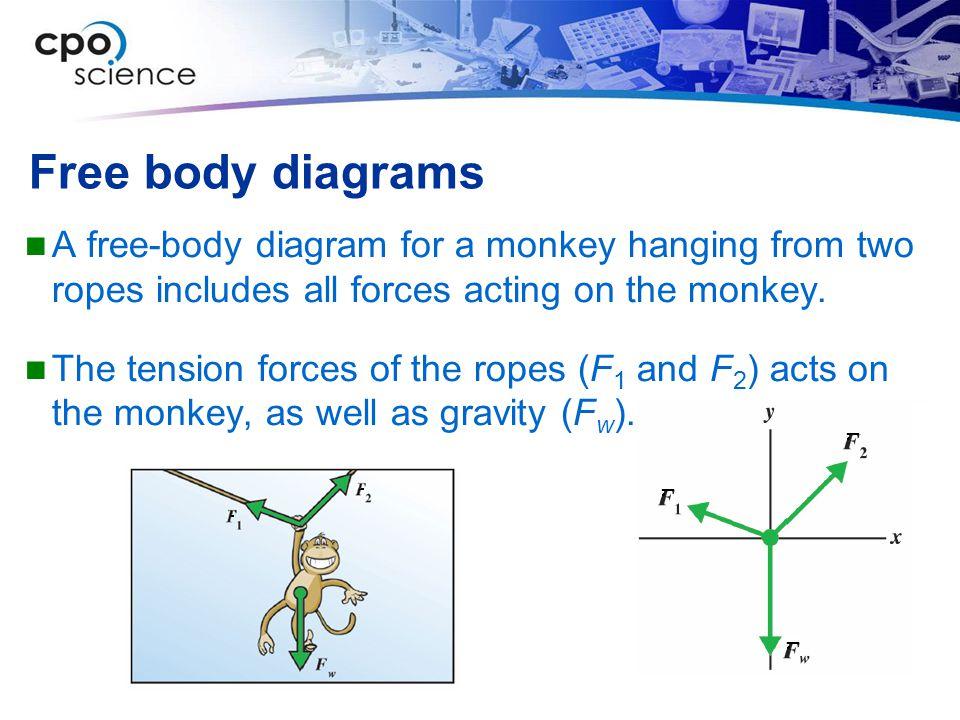 Free body diagrams A free-body diagram for a monkey hanging from two ropes includes all forces acting on the monkey.