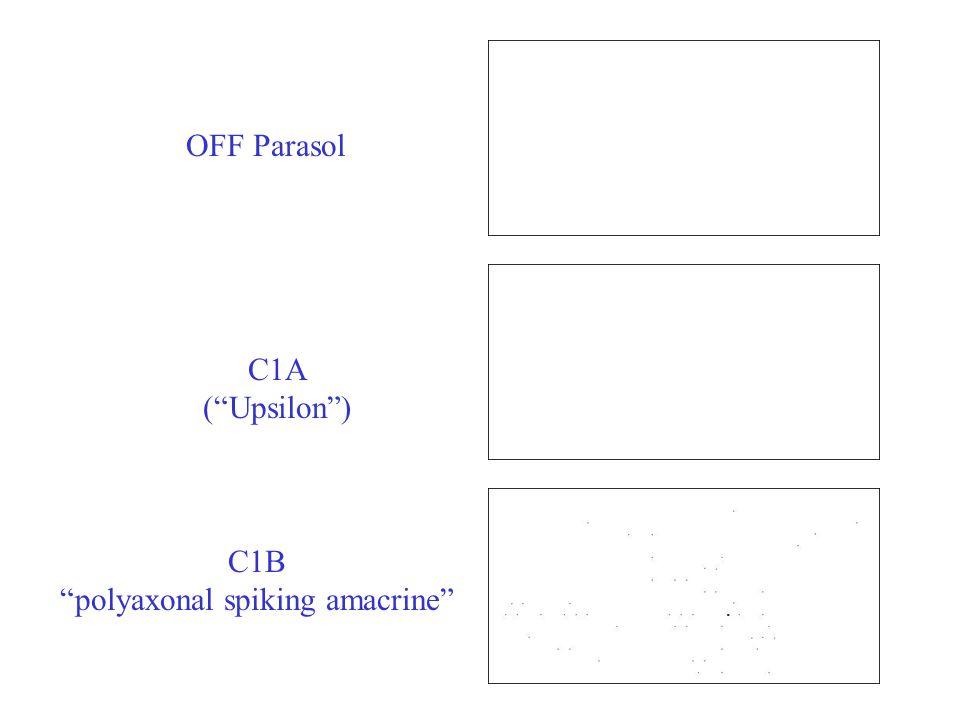 OFF Parasol C1A ( Upsilon ) C1B polyaxonal spiking amacrine