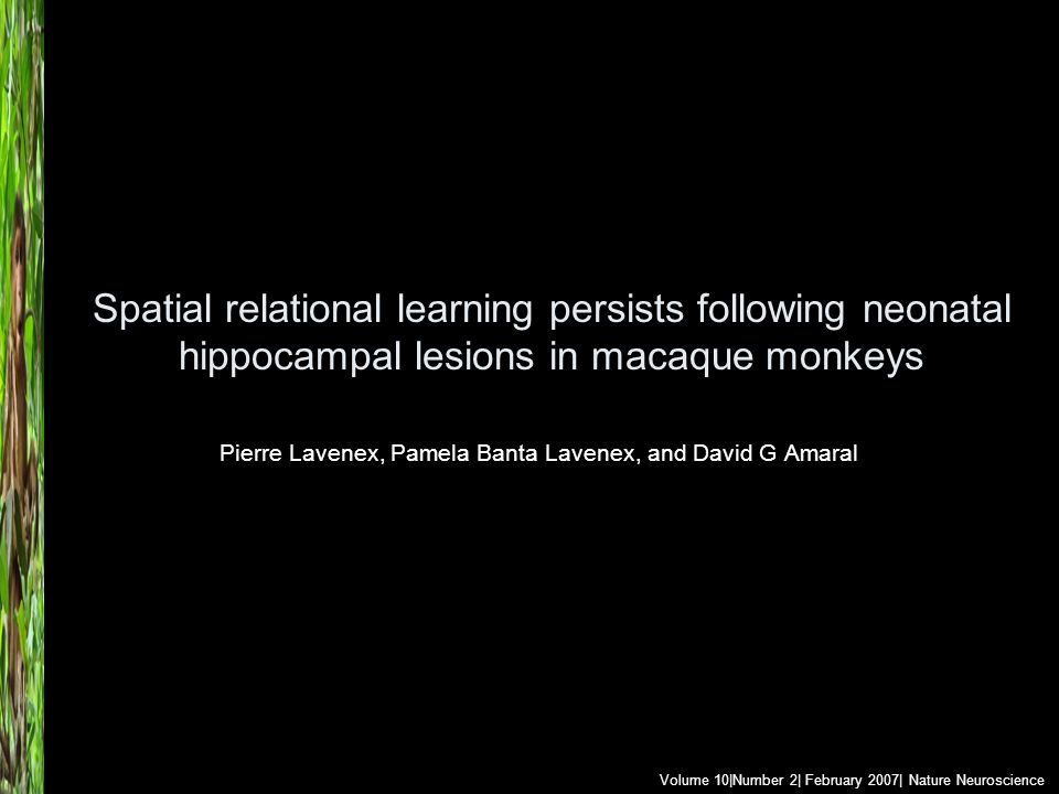 Spatial relational learning persists following neonatal hippocampal lesions in macaque monkeys Pierre Lavenex, Pamela Banta Lavenex, and David G Amara