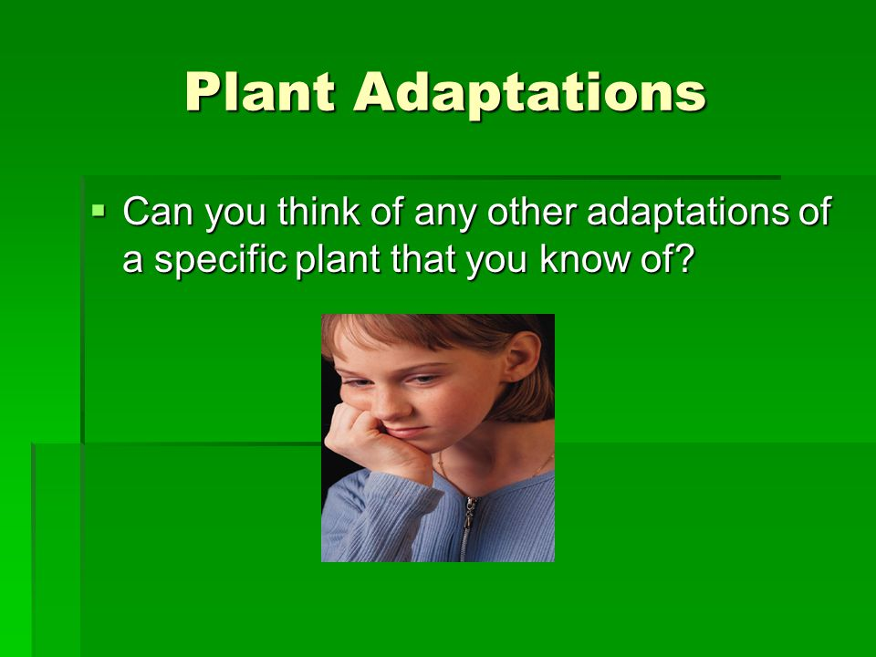 Plant Adaptations  Can you think of any other adaptations of a specific plant that you know of