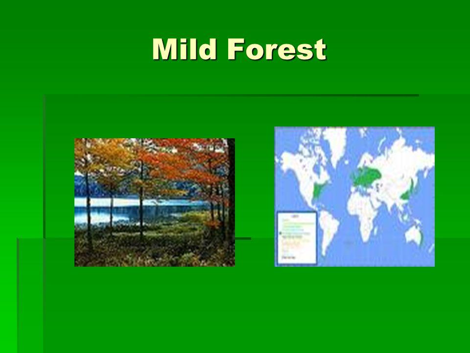 Mild Forest