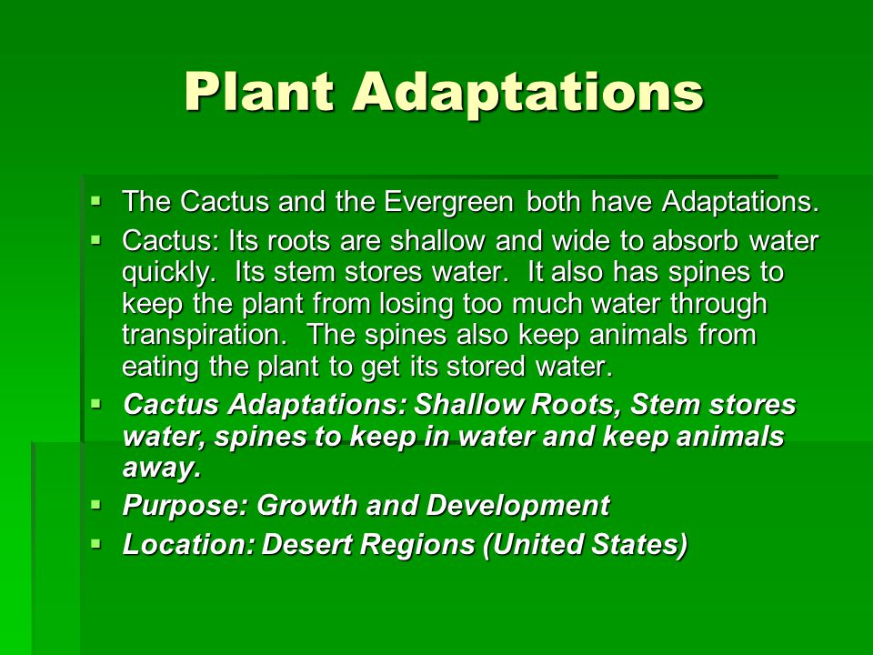 Plant Adaptations  The Cactus and the Evergreen both have Adaptations.