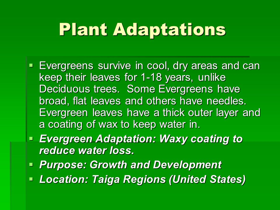 Science Bellringer  Define adaptation.  Name 1 plant and describe its adaptation.