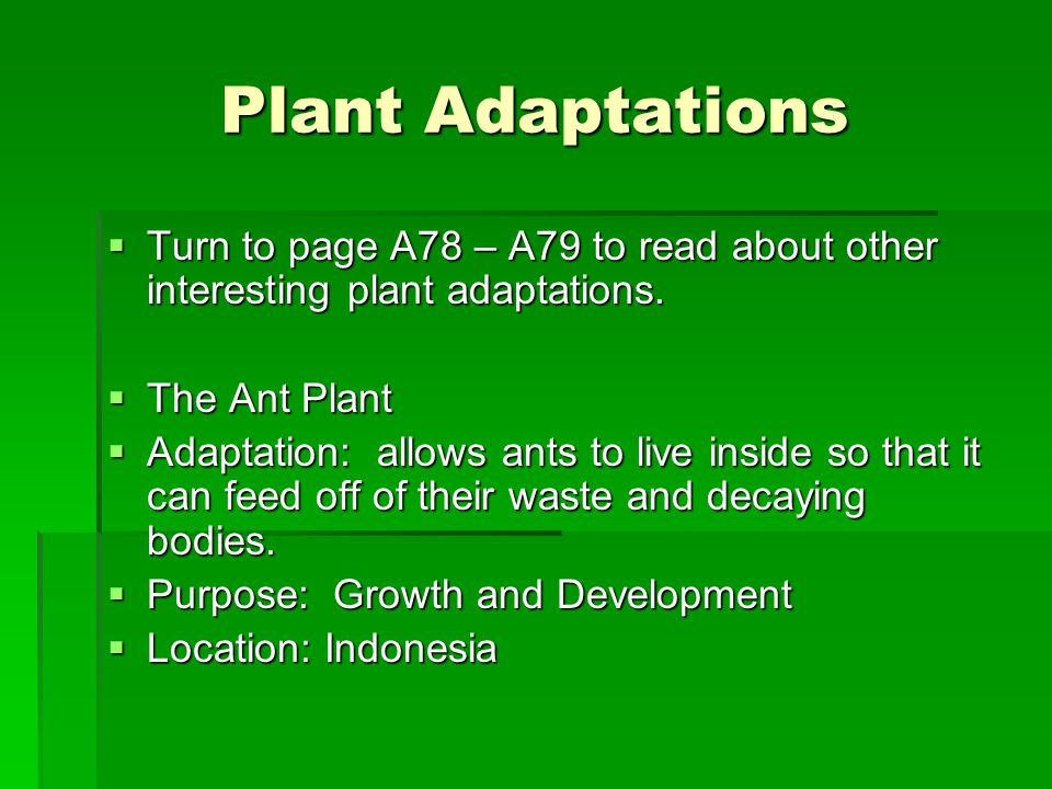 Plant Adaptations  Turn to page A78 – A79 to read about other interesting plant adaptations.