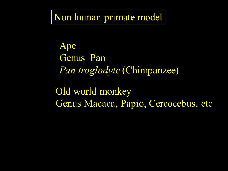 Non human primate model Ape Genus Pan Pan troglodyte (Chimpanzee) Old world monkey Genus Macaca, Papio, Cercocebus, etc