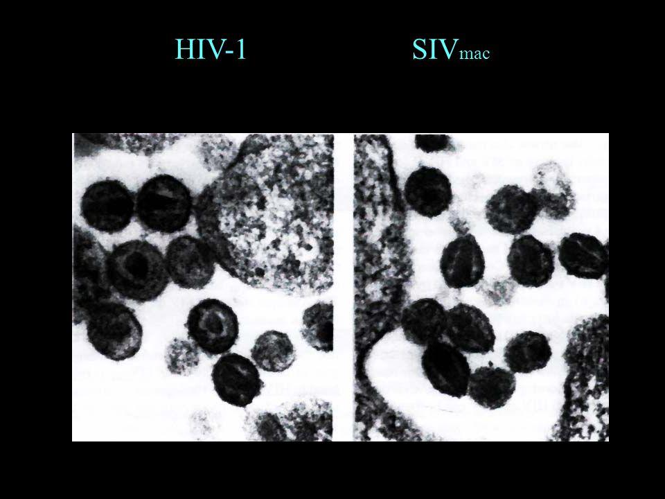 HIV-1 SIV mac