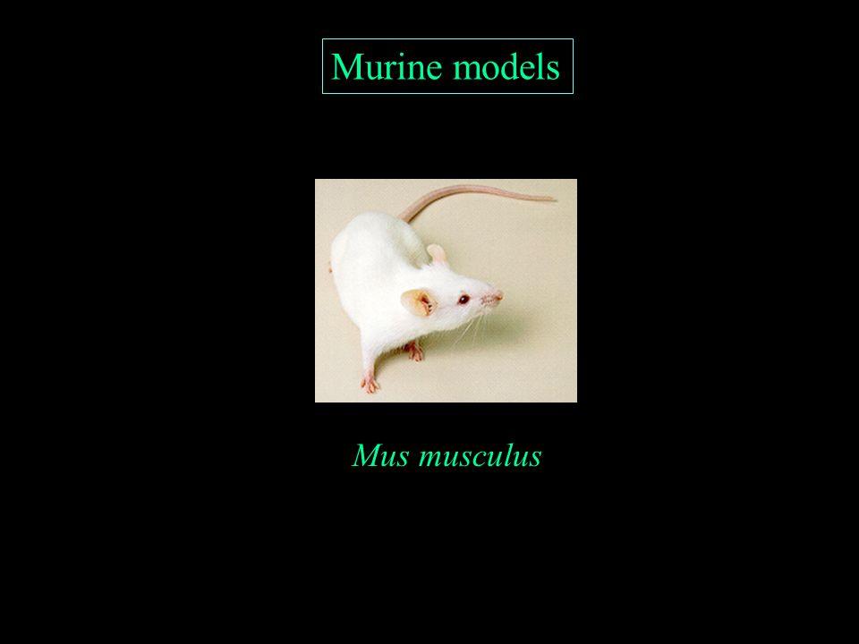 Murine models Mus musculus