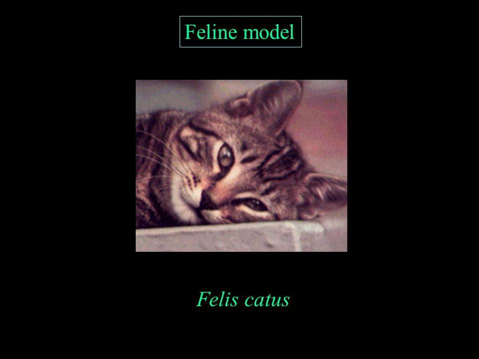 Feline model Felis catus