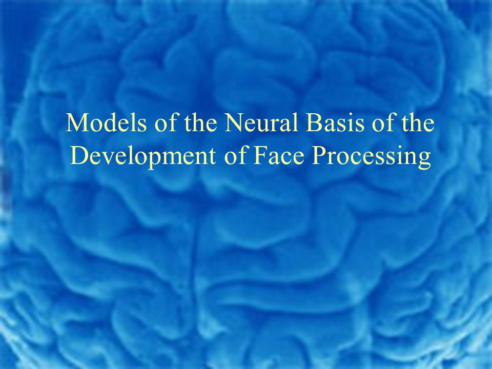 Models of the Neural Basis of the Development of Face Processing