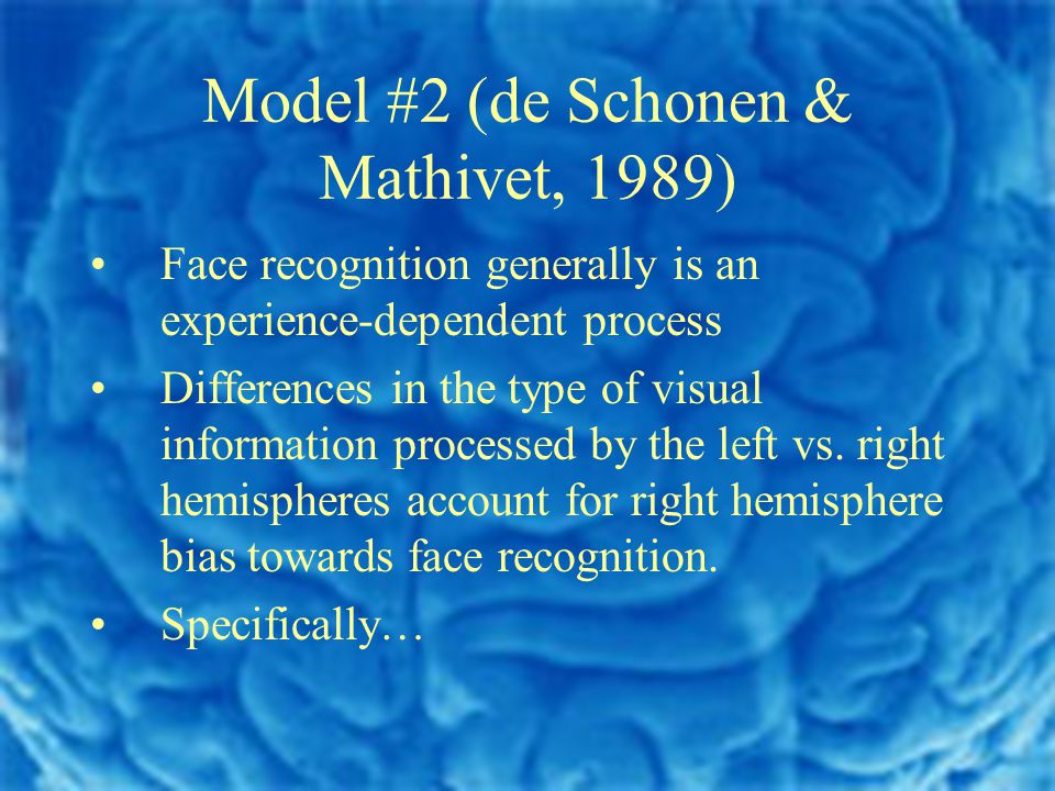 Model #2 (de Schonen & Mathivet, 1989) Face recognition generally is an experience-dependent process Differences in the type of visual information processed by the left vs.