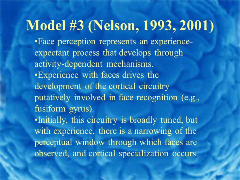 Model #3 (Nelson, 1993, 2001) Face perception represents an experience- expectant process that develops through activity-dependent mechanisms.