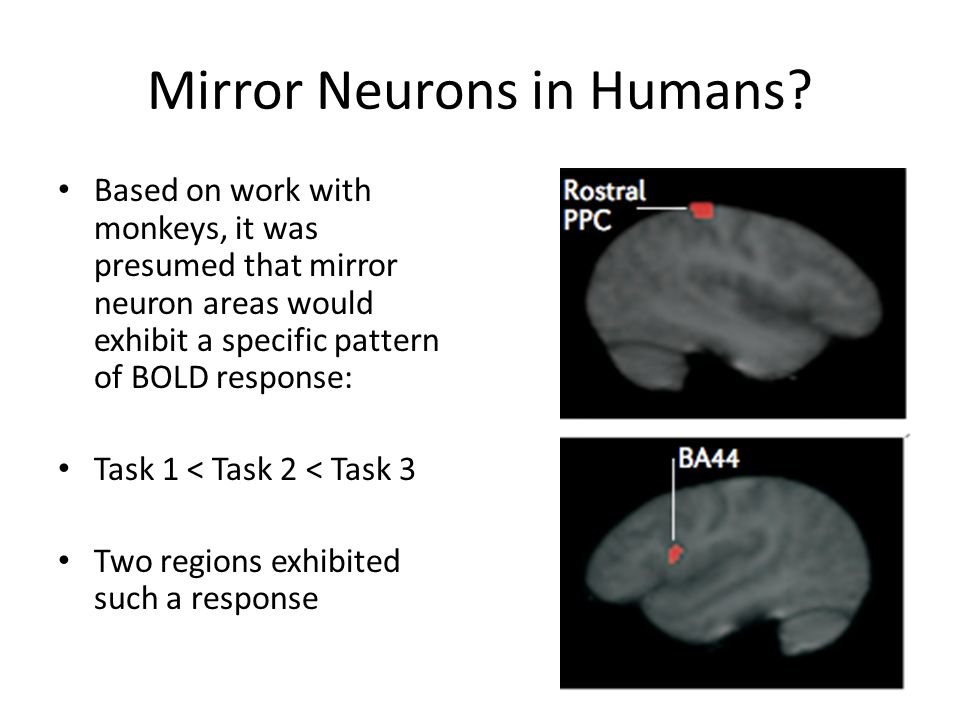 Mirror Neurons in Humans? Based on work with monkeys, it was presumed that mirror neuron areas would exhibit a specific pattern of BOLD response: Task