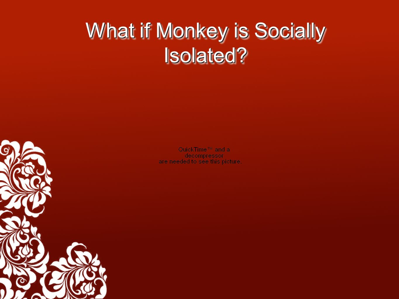 What if Monkey is Socially Isolated?