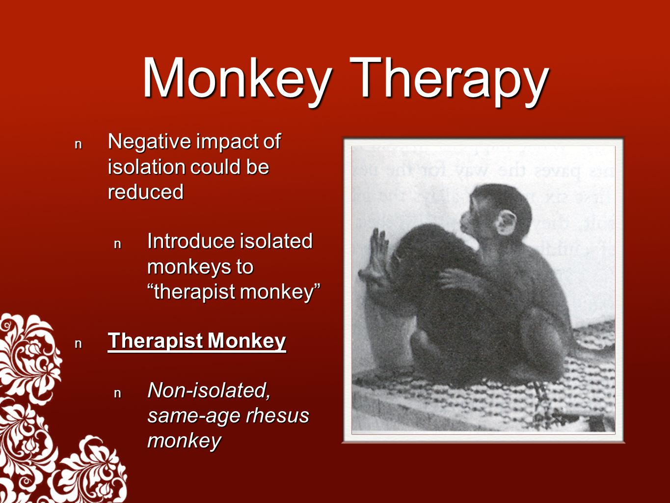 Monkey Therapy Negative impact of isolation could be reduced Negative impact of isolation could be reduced Introduce isolated monkeys to therapist monkey Introduce isolated monkeys to therapist monkey Therapist Monkey Therapist Monkey Non-isolated, same-age rhesus monkey Non-isolated, same-age rhesus monkey