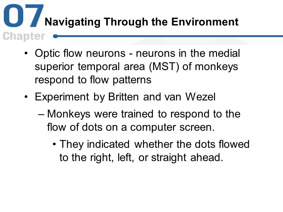 Navigating Through the Environment Optic flow neurons - neurons in the medial superior temporal area (MST) of monkeys respond to flow patterns Experim