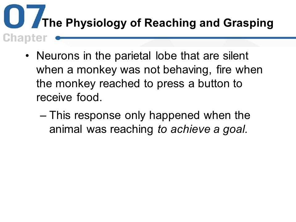 The Physiology of Reaching and Grasping Neurons in the parietal lobe that are silent when a monkey was not behaving, fire when the monkey reached to p