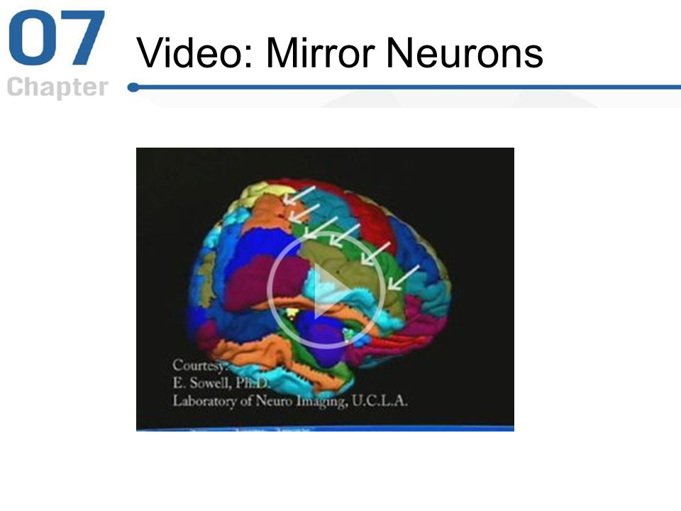 Video: Mirror Neurons