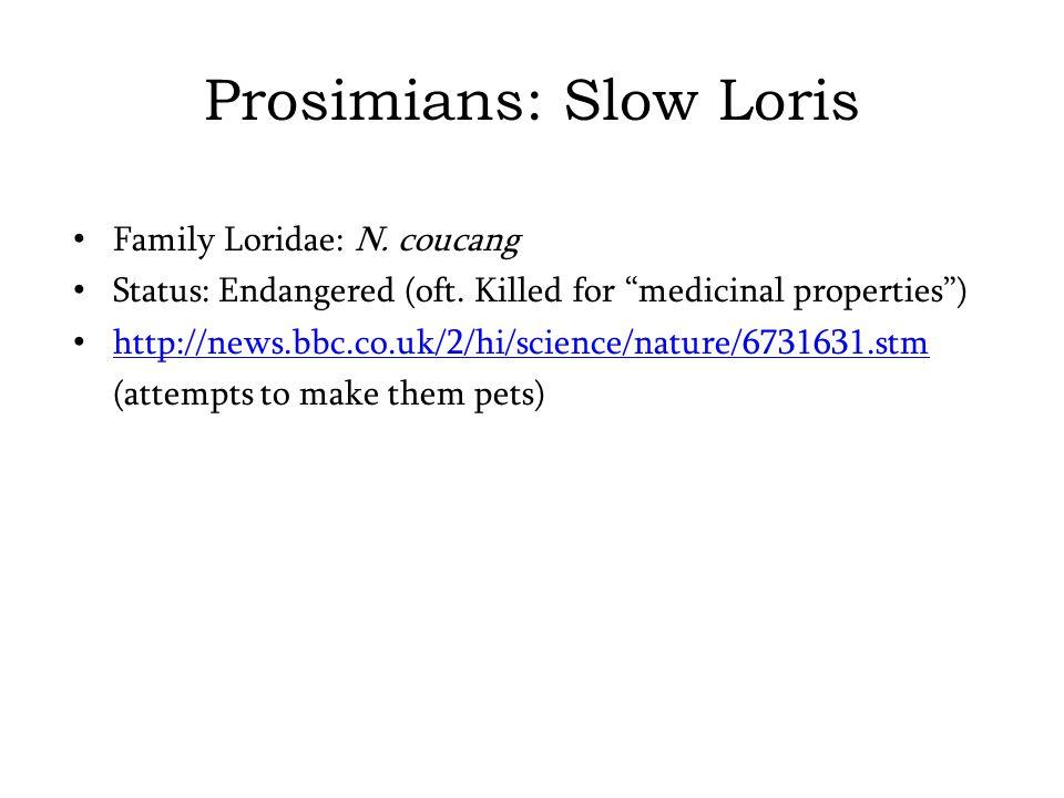 Prosimians: Slow Loris Family Loridae: N. coucang Status: Endangered (oft.