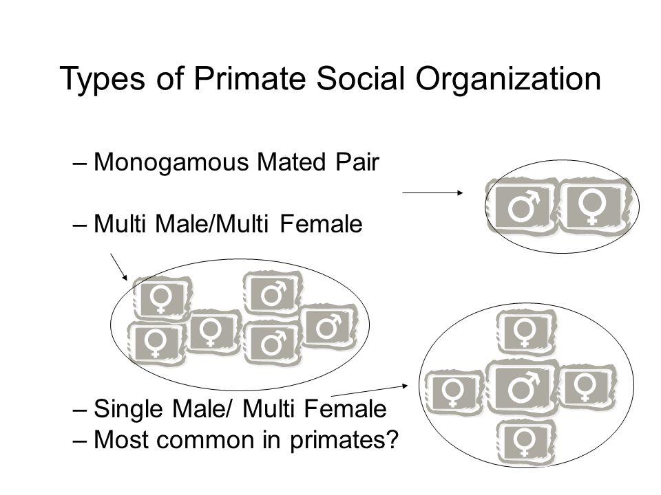 Types of Primate Social Organization –Monogamous Mated Pair –Multi Male/Multi Female –Single Male/ Multi Female –Most common in primates