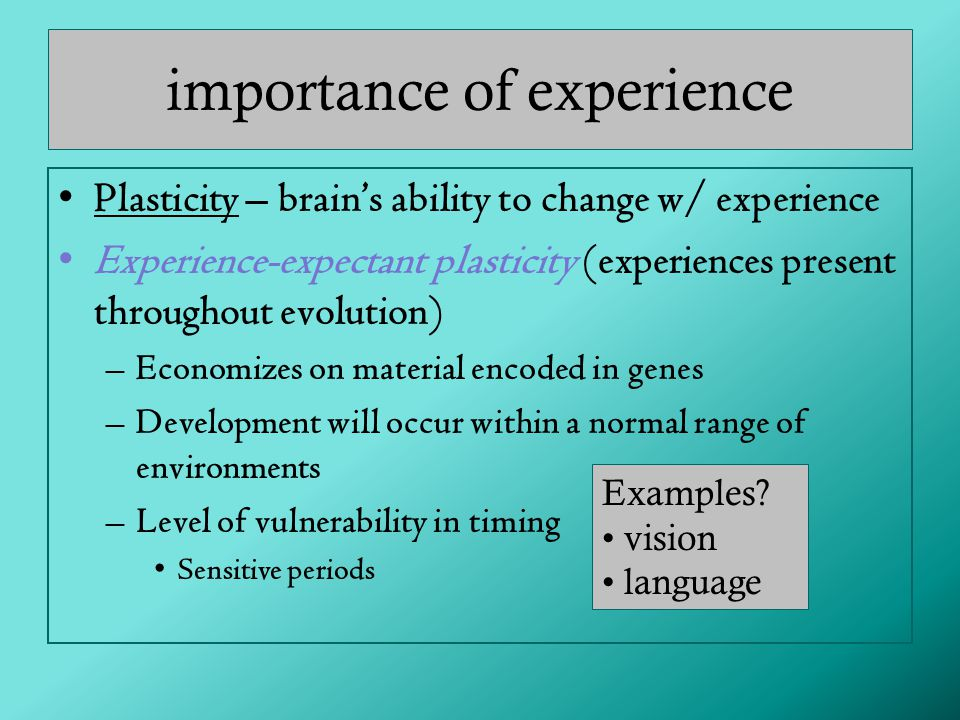 importance of experience Plasticity – brain's ability to change w/ experience Experience-expectant plasticity (experiences present throughout evolution) –Economizes on material encoded in genes –Development will occur within a normal range of environments –Level of vulnerability in timing Sensitive periods Examples.