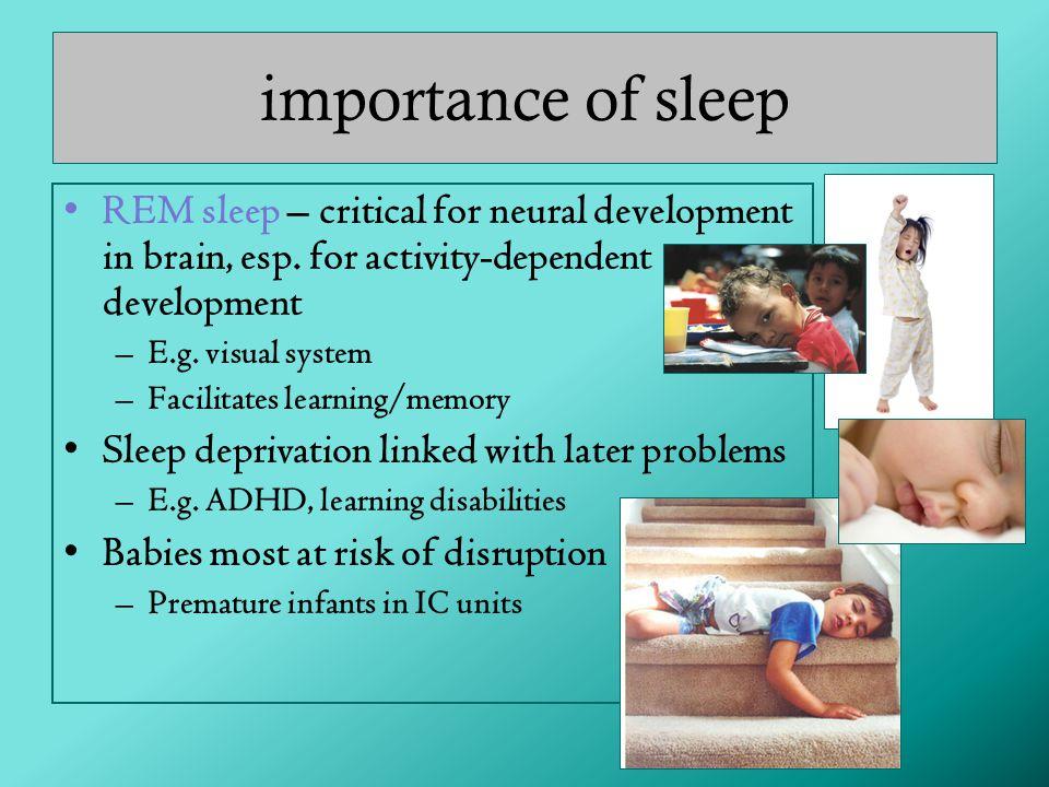 REM sleep – critical for neural development in brain, esp.