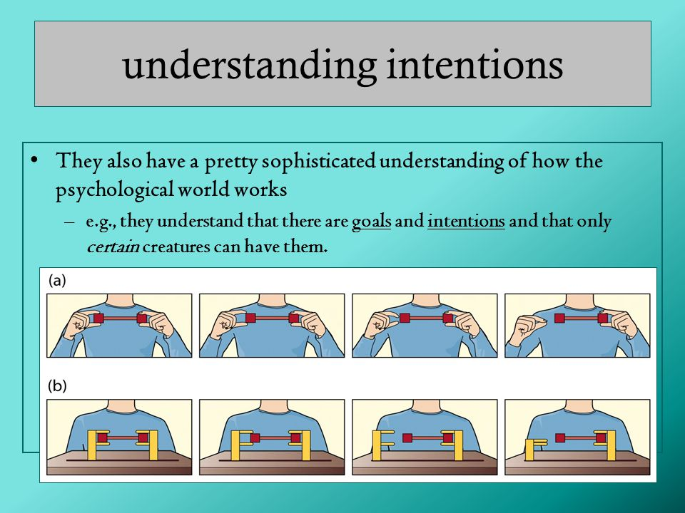 understanding intentions They also have a pretty sophisticated understanding of how the psychological world works –e.g., they understand that there are goals and intentions and that only certain creatures can have them.