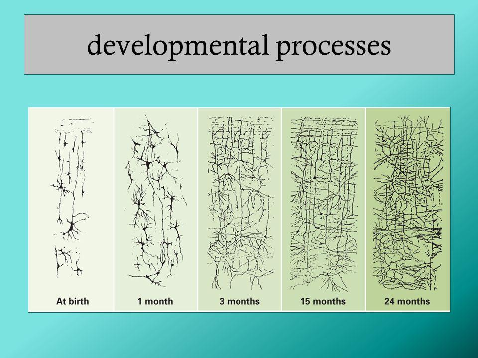 developmental processes