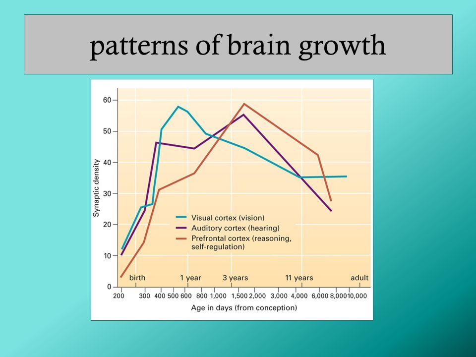patterns of brain growth