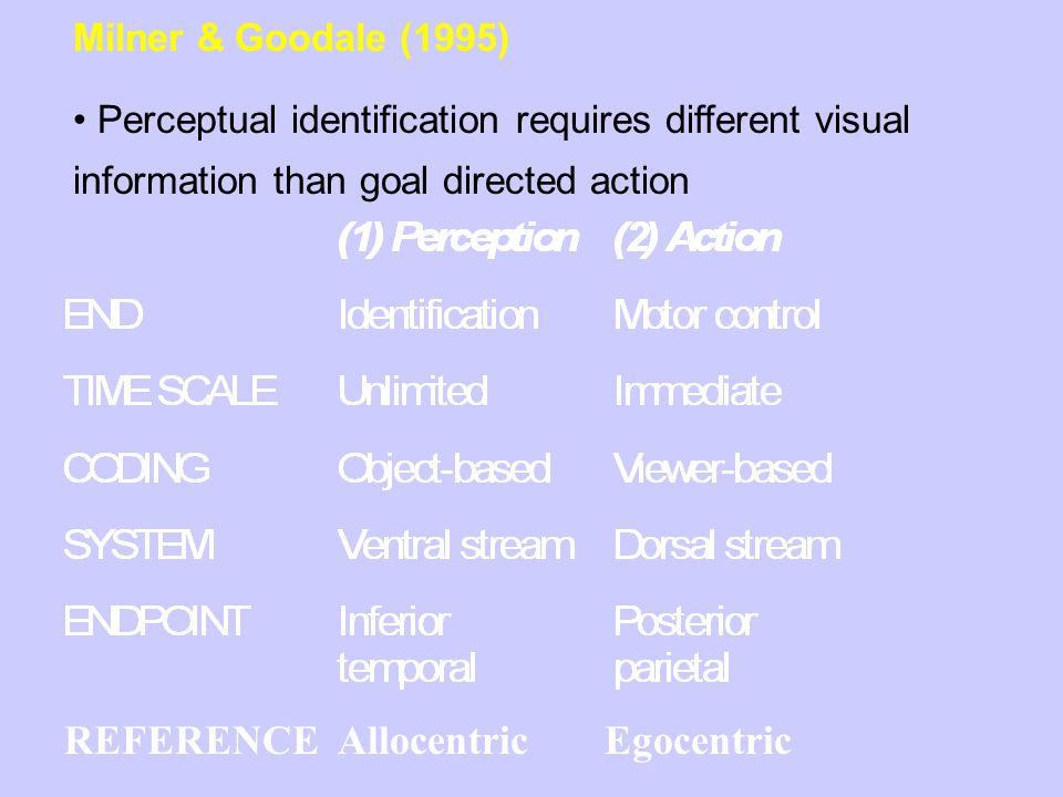 Involvement of the ventral stream in visuomotor behaviour