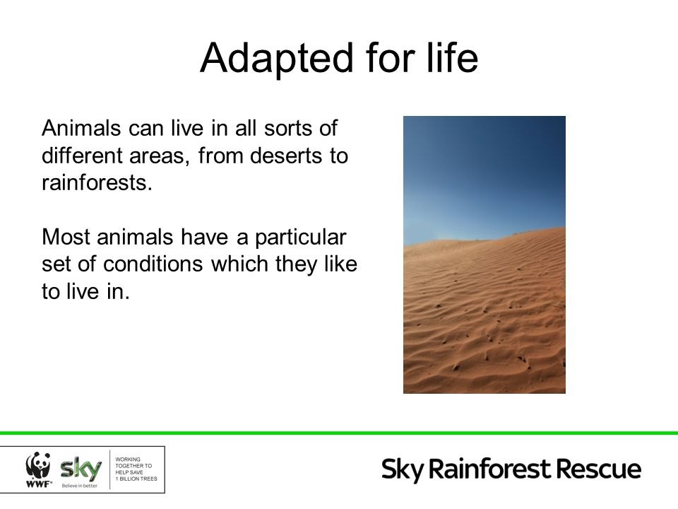 Adapted for life Animals can live in all sorts of different areas, from deserts to rainforests. Most animals have a particular set of conditions which