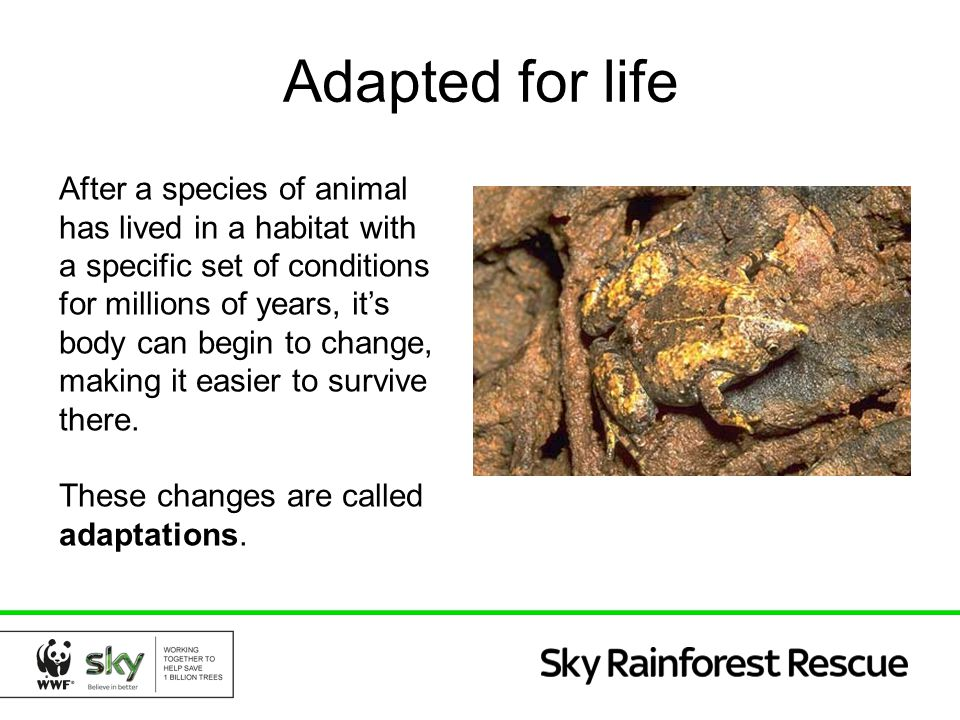 Adapted for life After a species of animal has lived in a habitat with a specific set of conditions for millions of years, it's body can begin to chan