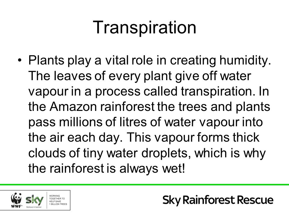 Transpiration Plants play a vital role in creating humidity. The leaves of every plant give off water vapour in a process called transpiration. In the