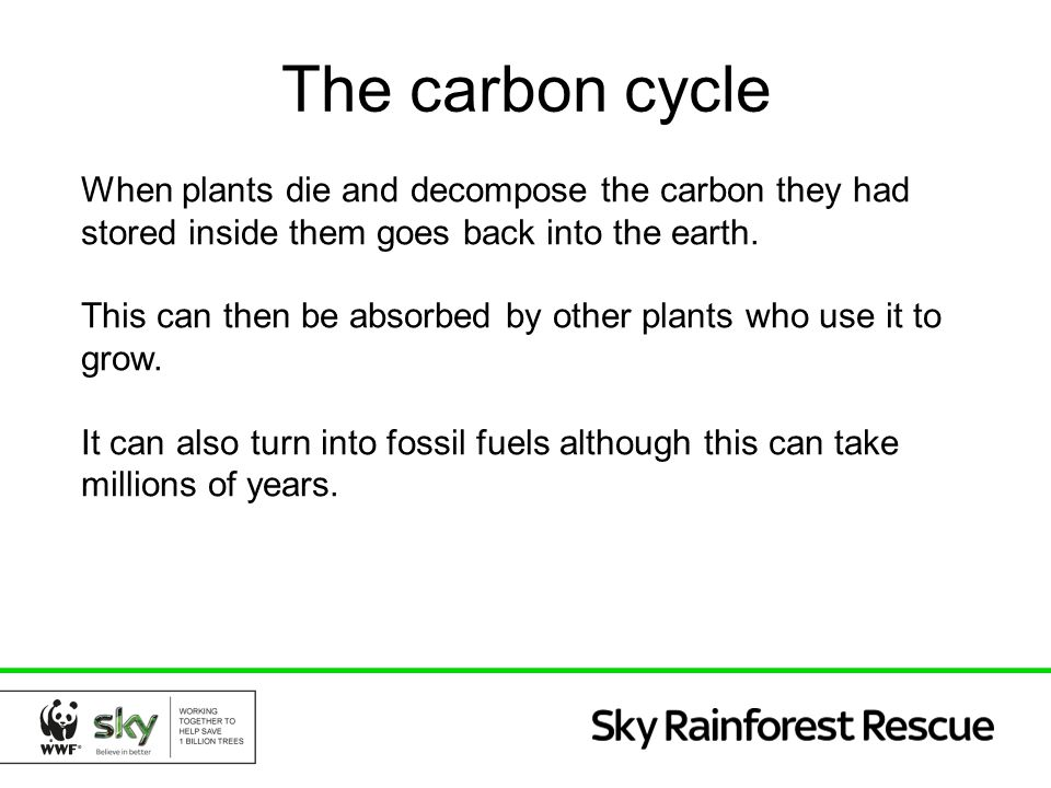 The carbon cycle When plants die and decompose the carbon they had stored inside them goes back into the earth. This can then be absorbed by other pla