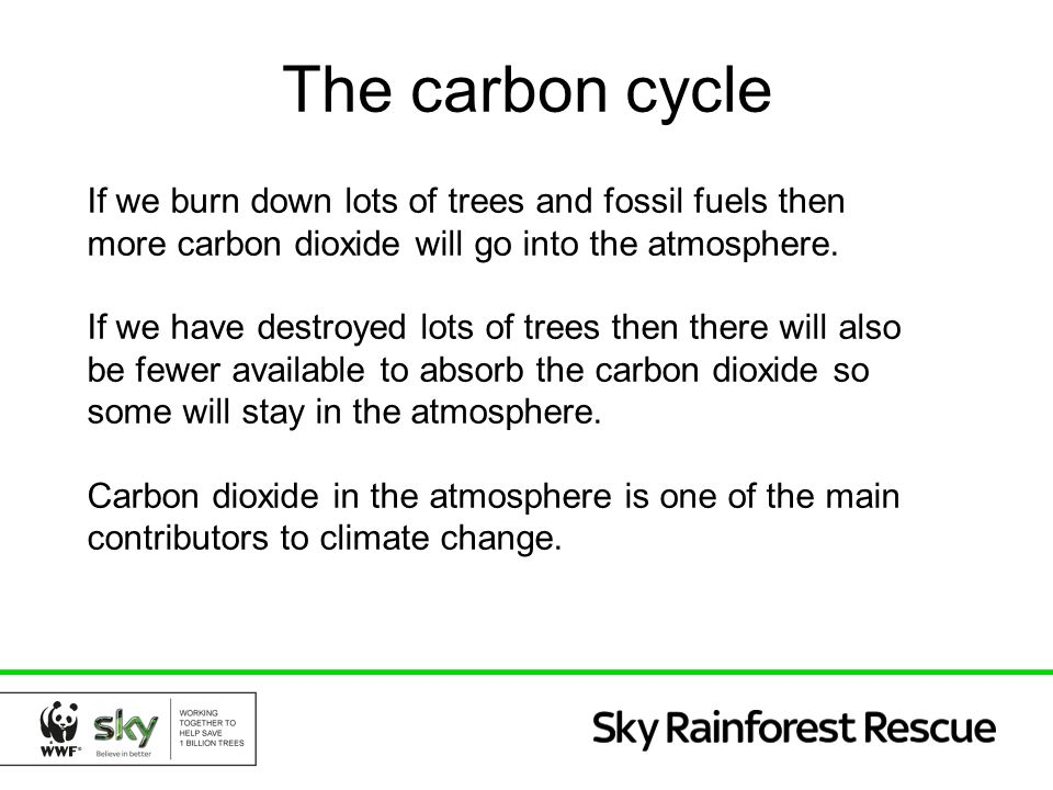 The carbon cycle If we burn down lots of trees and fossil fuels then more carbon dioxide will go into the atmosphere. If we have destroyed lots of tre