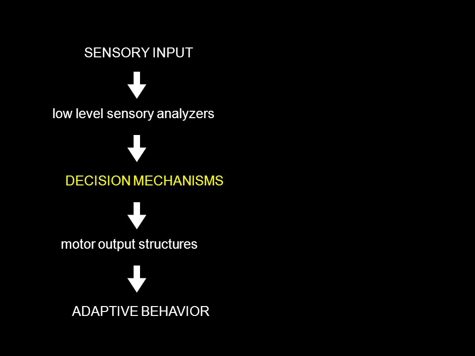 SENSORY INPUT DECISION MECHANISMS ADAPTIVE BEHAVIOR low level sensory analyzers motor output structures