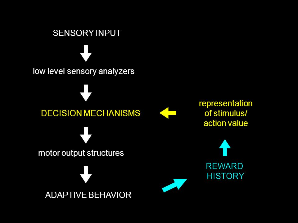 SENSORY INPUT DECISION MECHANISMS ADAPTIVE BEHAVIOR low level sensory analyzers motor output structures REWARD HISTORY representation of stimulus/ action value