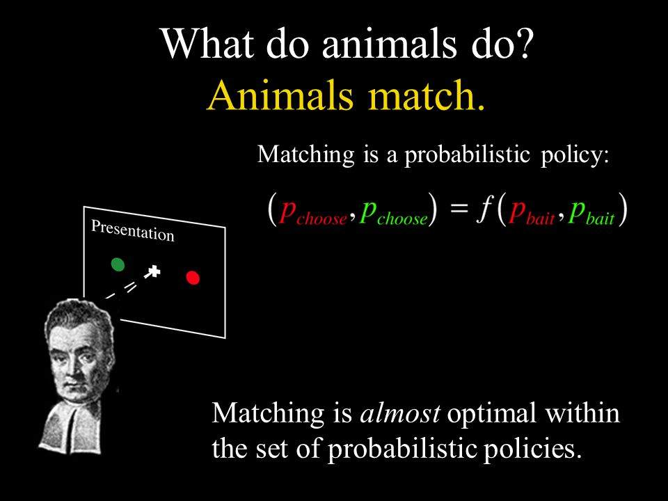 What do animals do? Matching is a probabilistic policy: Matching is almost optimal within the set of probabilistic policies. Animals match.