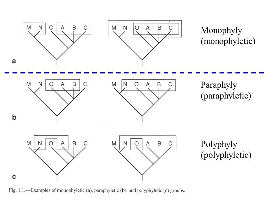 Monophyly (monophyletic) Paraphyly (paraphyletic) Polyphyly (polyphyletic)