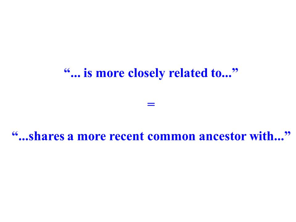 """... is more closely related to..."" = ""...shares a more recent common ancestor with..."""