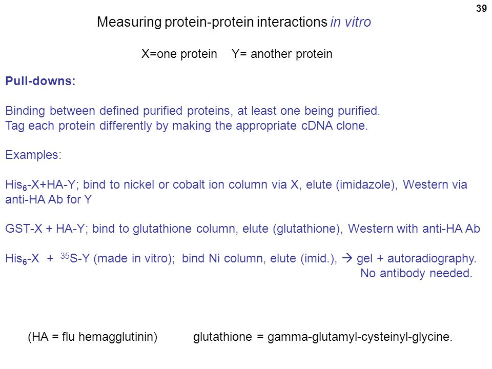 39 Measuring protein-protein interactions in vitro X=one protein Y= another protein Pull-downs: Binding between defined purified proteins, at least on