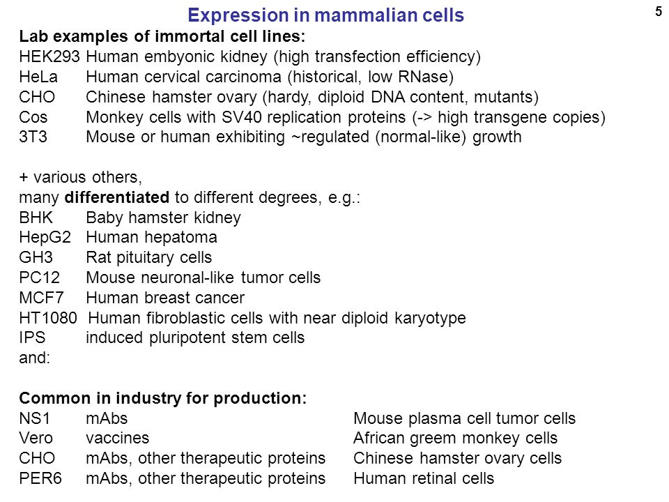 6 Mammalian cell expression Generalized gene structure for mammalian expression: cDNA gene Mam.prom.