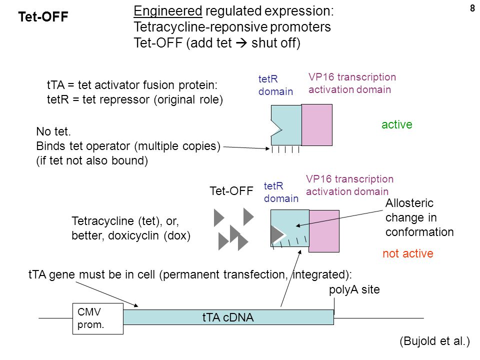 9 MIN.CMV prom. your favorite gene polyA site Mutliple tet operator elements MIN.